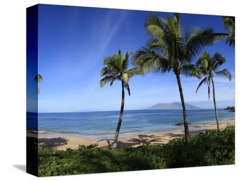 Palm Trees on the Beach, Maui, Hawaii, USA--Stretched Canvas Print
