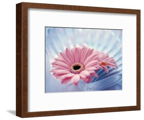 Close Up of Two Pink Gerbera Daisies in Water Ripples--Framed Art Print