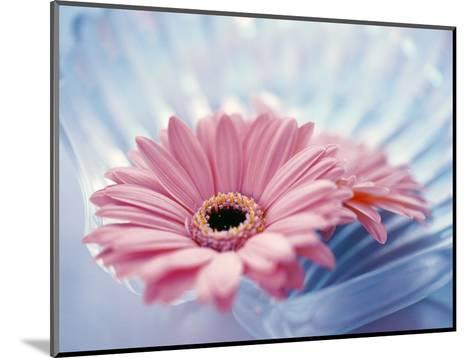 Close Up of Two Pink Gerbera Daisies in Water Ripples--Mounted Photographic Print
