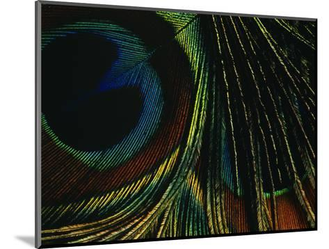 Close-up of a Peacock Feather--Mounted Photographic Print