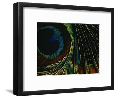 Close-up of a Peacock Feather--Framed Art Print