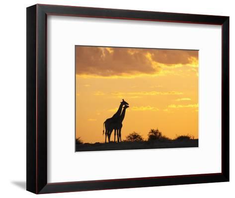Giraffes, Silhouetted at Sunset, Etosha National Park, Namibia, Africa-Ann & Steve Toon-Framed Art Print