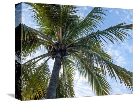 Coconut Tree, Low Angle View, Providenciales, Turks and Caicos Islands, West Indies, Caribbean-Kim Walker-Stretched Canvas Print