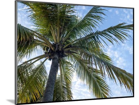 Coconut Tree, Low Angle View, Providenciales, Turks and Caicos Islands, West Indies, Caribbean-Kim Walker-Mounted Photographic Print