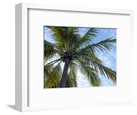 Coconut Tree, Low Angle View, Providenciales, Turks and Caicos Islands, West Indies, Caribbean-Kim Walker-Framed Art Print
