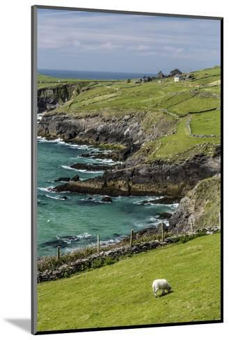 Sheep Fences and Rock Walls Along the Dingle Peninsula-Michael Nolan-Mounted Photographic Print