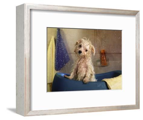 Little Wet Maltese in Bath Tub-Henryk T^ Kaiser-Framed Art Print