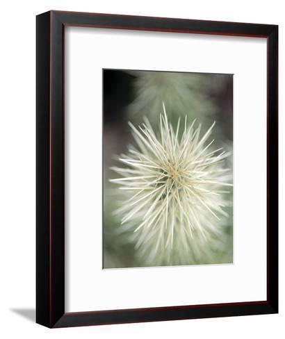 Jumping Cholla, Scotsdale, AZ-Elisa Cicinelli-Framed Art Print