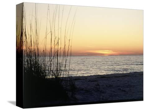 Sunset on Sanibel Island, Gulf Coast of FL-David Davis-Stretched Canvas Print