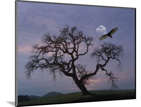 Oak Tree Silhouetted Against Cloudy Sunrise with Partially Obscured Moon and Flying Vulture-Diane Miller-Mounted Photographic Print