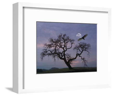 Oak Tree Silhouetted Against Cloudy Sunrise with Partially Obscured Moon and Flying Vulture-Diane Miller-Framed Art Print