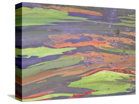 Rainbow Eucalyptus, Bark Pattern, Botanical Garden-Stan Osolinski-Stretched Canvas Print