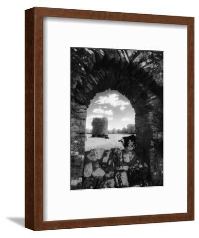 Cows, Ballybeg Abbey, Ireland-Karen Schulman-Framed Art Print