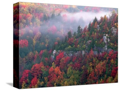 Blackwater Canyon, Wv-Robert Finken-Stretched Canvas Print