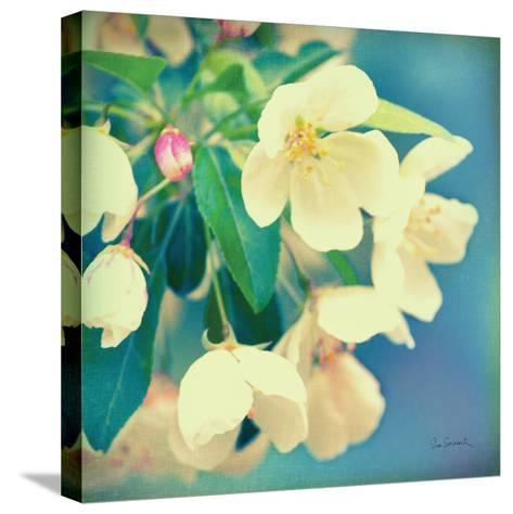 Natures Apple Blossom-Sue Schlabach-Stretched Canvas Print