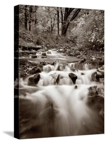 Wahkeena Creek Crop-Alan Majchrowicz-Stretched Canvas Print