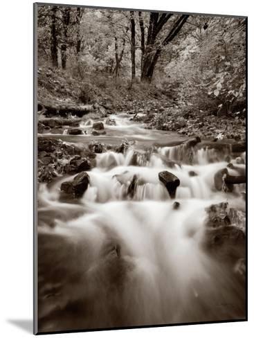 Wahkeena Creek Crop-Alan Majchrowicz-Mounted Art Print