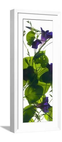 Morning Glory Rising, 2010-Julia McLemore-Framed Art Print