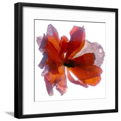 Begonia Round-Julia McLemore-Framed Art Print