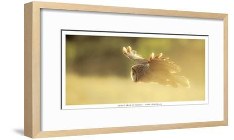 Great Grey in Fligh-Gary Crandall-Framed Art Print