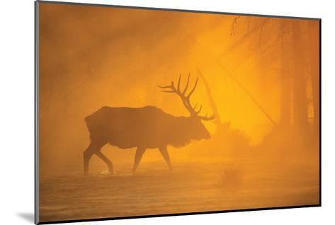 River Crossing-Gary Crandall-Mounted Art Print