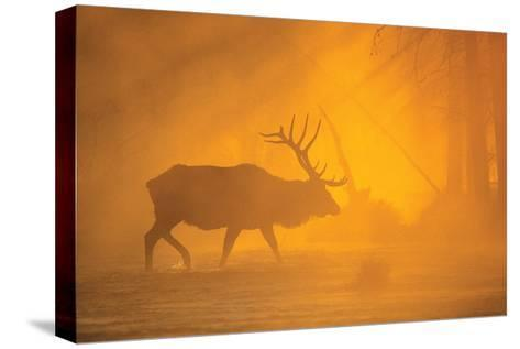 River Crossing-Gary Crandall-Stretched Canvas Print