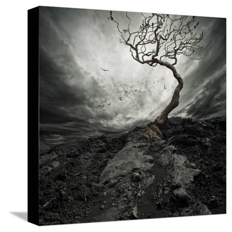 Dramatic Sky Over Old Lonely Tree-NejroN Photo-Stretched Canvas Print