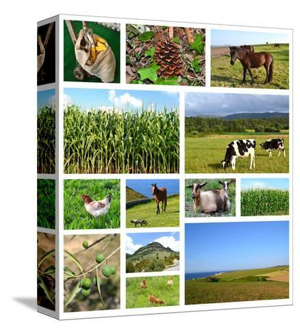 Collage Of Rural Landscapes- miff32-Stretched Canvas Print