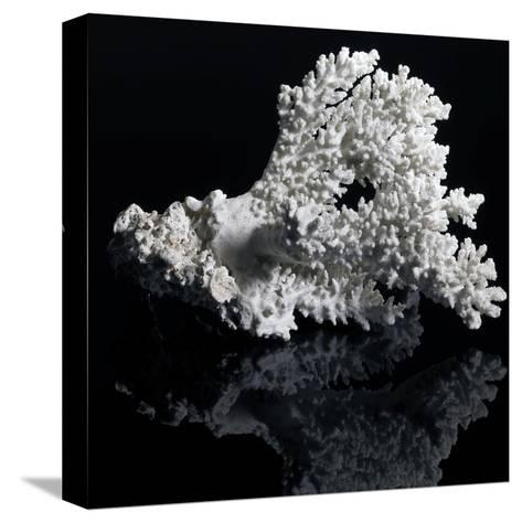 White Coral-prill-Stretched Canvas Print