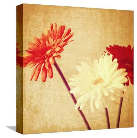 Art Floral Vintage Background with Red and White Gerbera in Sepia-Irina QQQ-Stretched Canvas Print