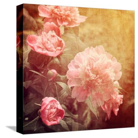 Art Floral Vintage Background with Pink Peonies-Irina QQQ-Stretched Canvas Print