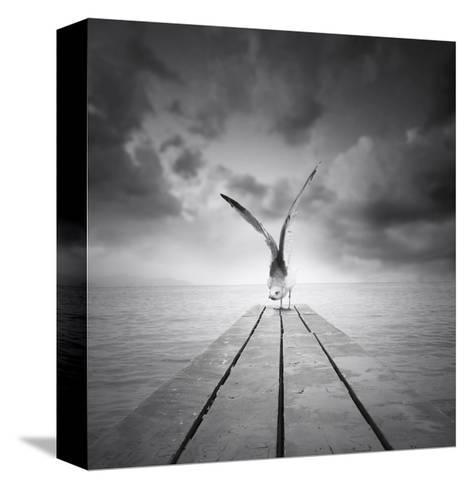 Freedom-ValentinaPhotos-Stretched Canvas Print