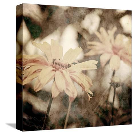 Art Floral Vintage Sepia Background with Light Yellow Chamomiles-Irina QQQ-Stretched Canvas Print