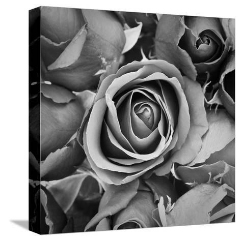 Sorrow Rose-zirconicusso-Stretched Canvas Print