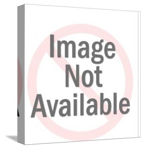 Saint Bernard-Pop Ink - CSA Images-Stretched Canvas Print