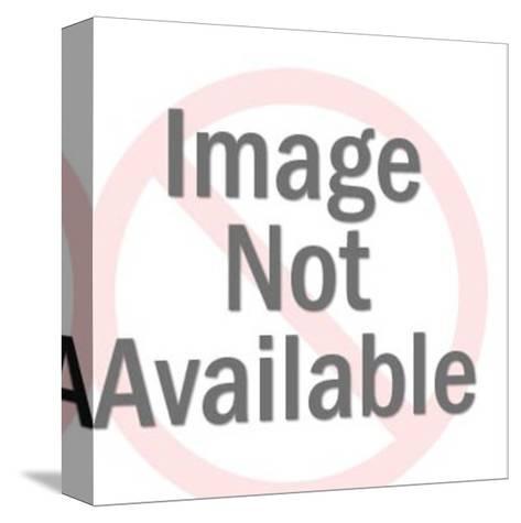 Boston Terrier Portrait-Pop Ink - CSA Images-Stretched Canvas Print