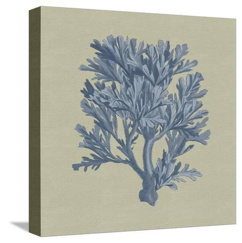Chambray Coral IV-Vision Studio-Stretched Canvas Print