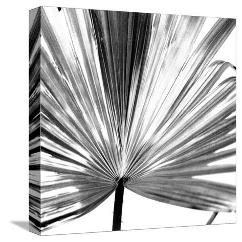 Black and White Palms III-Jason Johnson-Stretched Canvas Print