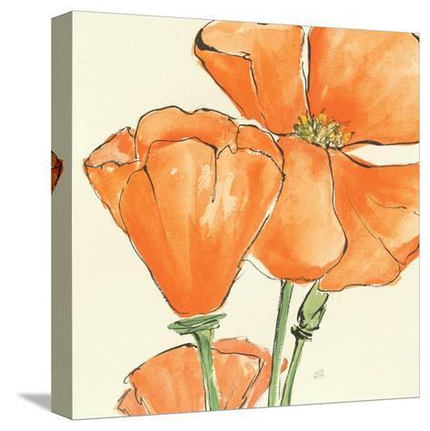 Sunshine Poppy III-Chris Paschke-Stretched Canvas Print