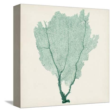 Sea Fan I-Vision Studio-Stretched Canvas Print