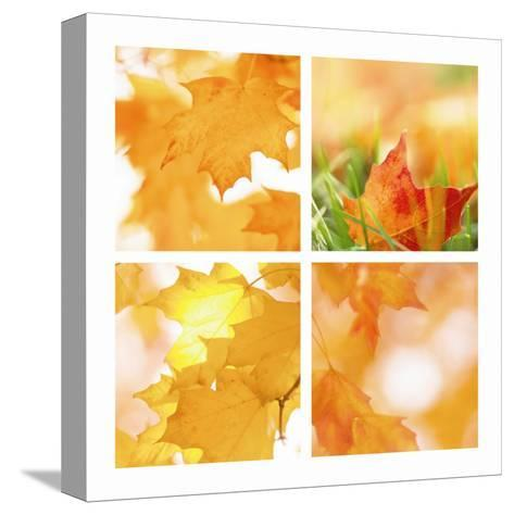 Autumn Maple Leaves Four Patch--Stretched Canvas Print