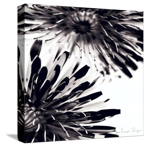 Contrastoflora II-Jean-Fran?ois Dupuis-Stretched Canvas Print