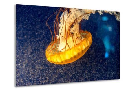 Orange Jellyfish on the Dark Background-Alex9500-Metal Print