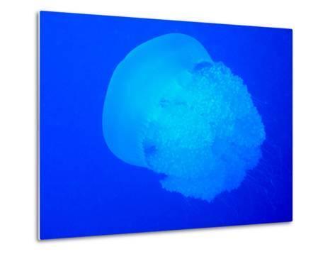Giant Jellyfish-tonguy324-Metal Print
