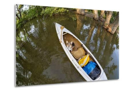 Corgi Dog in a Decked Expedition Canoe on a Lake in Colorado, a Distorted Wide Angle Fisheye Lens P-PixelsAway-Metal Print