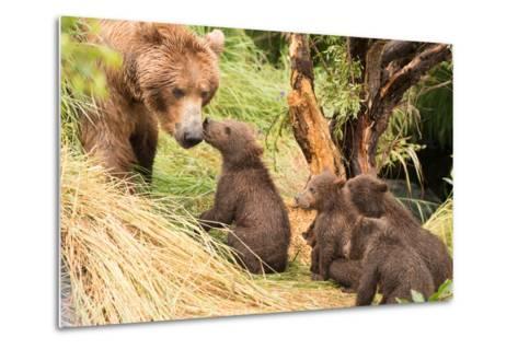 Four Bear Cubs Greet Mother beside Tree-Nick Dale-Metal Print