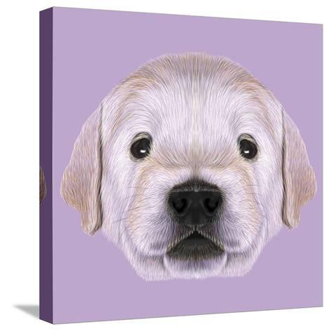 Illustrated Portrait of Golden Retriever Puppy-ant_art19-Stretched Canvas Print