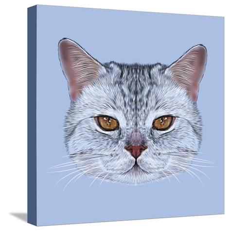 Illustrative Portrait of Scottish Straight Cat. Cute Domestic Tabby Cat with Orange Eyes.-ant_art19-Stretched Canvas Print