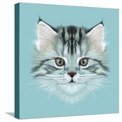 Illustrative Portrait of Domestic Kitten. Cute Grey Tabby Kitten.-ant_art19-Stretched Canvas Print