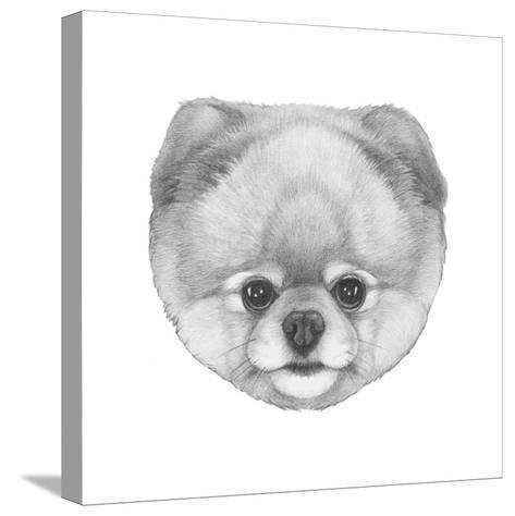 Original Drawing of Pomerania. Isolated on White Background.-victoria_novak-Stretched Canvas Print